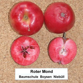 Roter Mond Herbstapfel / Malus Roter Mond