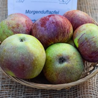 Apfel Morgenduft / Malus Morgenduft