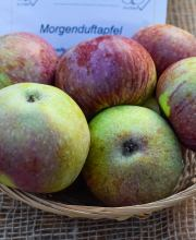 Apfel Morgenduft, Malus Morgenduft