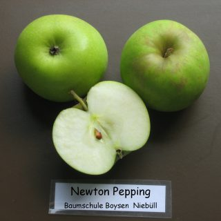 Newton Pepping / Malus Newton Pepping