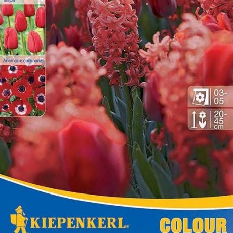Symphony of Colours Red Harmony / Kiepenkerl Zwiebel Mischung Red Harmony