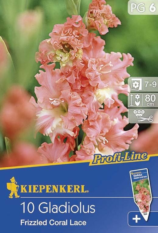 Gladiolen Frizzled Coral Lace