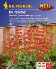 Blutsalbei Summer Jewel Red