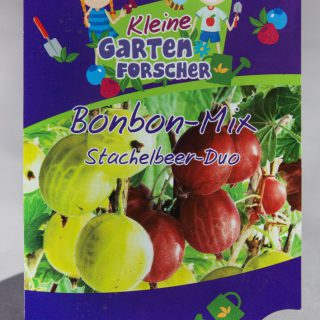 Stachelbeer-Duo Bonbon-Mix / Stachelbeer-Duo Bonbon-Mix – Kleine Gartenforscher