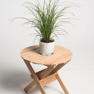 Ziergräser indoor / Carex brunnea