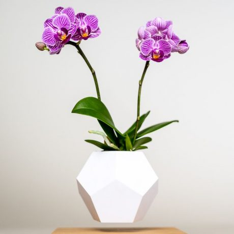 Miniorchidee