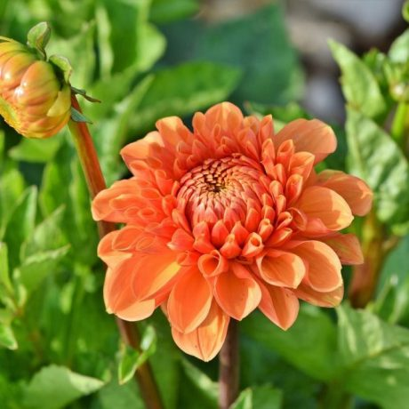 Dahlia Lubega Power Orange