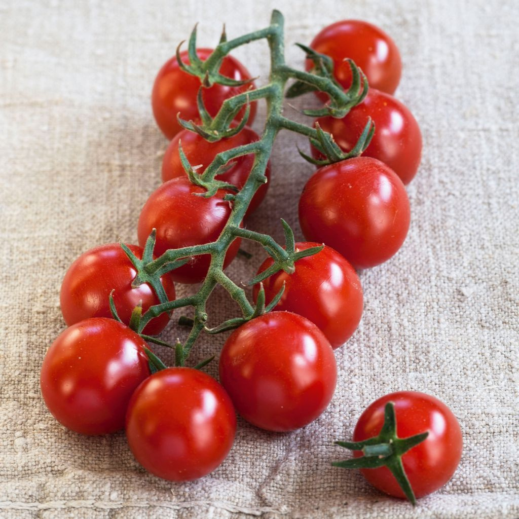 Tomate Sweet Red