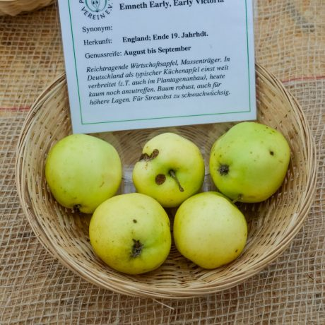 Apfel Early Victoria / Malus Early Victoria