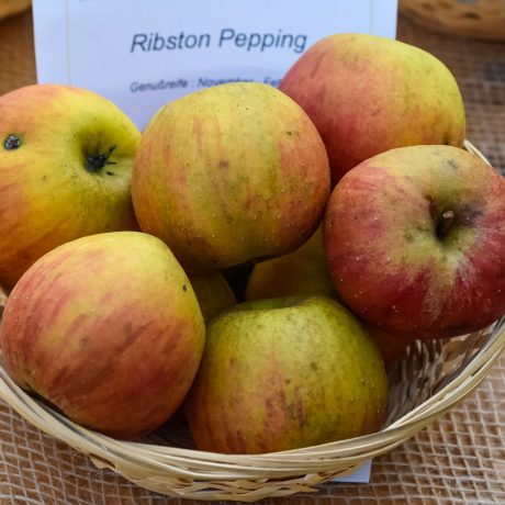 Apfel Ribston Pepping / Malus Ribston Pepping
