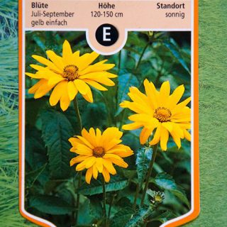 Sonnenauge / Heliopsis helianthoides