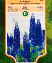 Pacific-Garten-Rittersporn Black Knight, Delphinium Pacific Black Knight