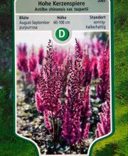 Hohe Kerzenspiere, Astilbe chinensis var. taquetii