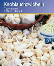 Knoblauch Thermidrome, Allium sativum